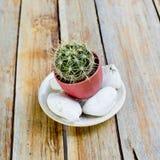 Kaktusy w flowerpot z kamieniami, na drewnianym stole Obrazy Stock