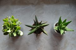 Kaktusy w flowerpots na windowsill w domu strzelali z góry zdjęcia stock