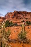 Kaktusy w jarze Zdjęcia Royalty Free