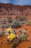 Kaktusy w jarze Zdjęcia Stock