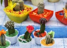 Kaktusy w kolorowych garnkach na kwiatu jarmarku Obraz Royalty Free