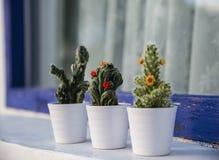 Kaktusy w małych garnkach plenerowych Zdjęcie Royalty Free