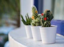 Kaktusy w małych garnkach plenerowych Zdjęcia Royalty Free