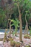 Kaktusy w naturze Obrazy Royalty Free