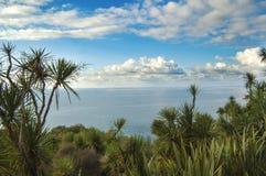 Kaktusy w tle morze Obrazy Royalty Free