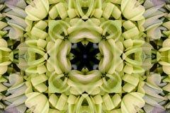 Kaléidoscope avec le bel ornamental de couleur Images stock