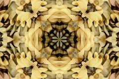 Kaléidoscope avec le bel ornamental de couleur Images libres de droits