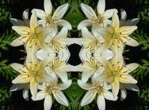 Kaléidoscope de lis Images libres de droits