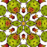 Kaléidoscope des succulents Photographie stock