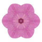 Kaléidoscope rose de fleur d'hortensia d'isolement sur le blanc Photo libre de droits