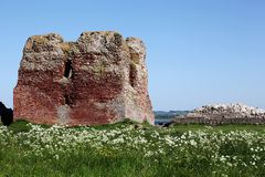 Kalø castle ruins Stock Photography