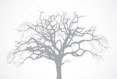 Kal gammal torr död trädkontur för vektor utan l Royaltyfria Bilder
