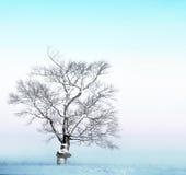 Kal tree med snow royaltyfria foton