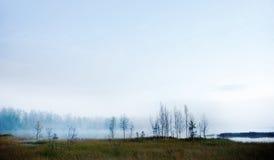 Kala björkträd vid den dimmiga floden Royaltyfri Foto