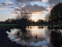 Kala filialer för härlig höst ingen sol s för sidabygdflod Royaltyfria Foton