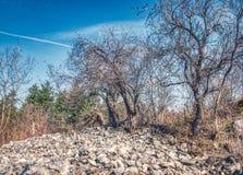 Kala torra träd över stenar arkivfoton