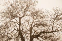Kala trädöverkantfilialer Arkivbilder