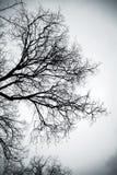Kala träd över grå himmel monokrom Royaltyfri Fotografi