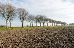 Kala träd längs ett plogat fält Royaltyfria Bilder