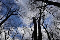 Kala träd mot dyster himmel, sikt underifrån arkivfoto