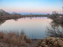 Kala träd som omges och reflekteras i en sjö Fotografering för Bildbyråer