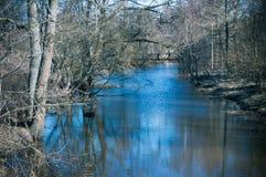 Kala träd vid floden i vår royaltyfri fotografi