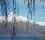 Kala trädfilialer mot snö-täckte berg Arkivfoto