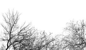 Kala trädfilialer på en vit himmel Arkivbilder