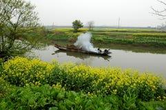 Kalafiory zbliżają wiosnę Fotografia Royalty Free