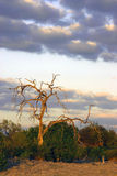 Kalahari bij Schemer royalty-vrije stock afbeeldingen
