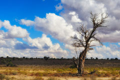The Kalahari (Botswana). The Kalahari Desert is a large arid to semi-arid sandy area in Southern Africa covering much of Botswana and parts of Namibia and South stock photos