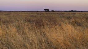 Kalahari. Central Kalahari Game Reserve, Botswana Stock Image