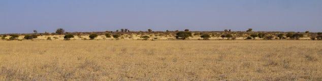 Kalahari. Central Kalahari Game Reserve, Botswana Royalty Free Stock Photos