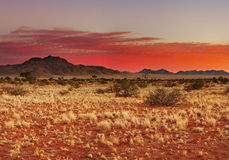 Kalahari Desert. Colorful sunset in Kalahari Desert, Namibia royalty free stock photos