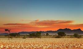 Kalahari Desert. Colorful sunset in Kalahari Desert, Namibia royalty free stock images