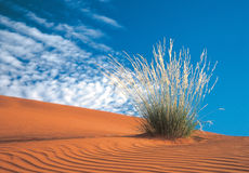 Kalahari desert Royalty Free Stock Photo