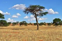 Kalahari desert, Namibia Stock Photography