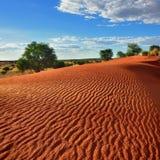 Kalahari desert, Namibia. Beautiful landscape in Kalahari with big red dune and bright colours at sunset time Royalty Free Stock Image