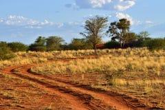 The Kalahari desert, Namibia Royalty Free Stock Image
