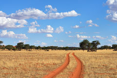 The Kalahari desert, Namibia Royalty Free Stock Photography