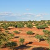 The Kalahari desert, Namibia. Landscape of the Kalahari desert at sunset time, Namibia, Africa Stock Images