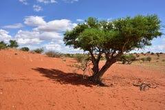 Kalahari desert, Namibia Royalty Free Stock Photography