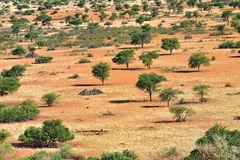 Kalahari desert, Namibia. Lovely landscape in Kalahari with acacia trees and bright colours at sunset time. View from above Royalty Free Stock Image