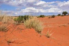 Kalahari desert, Namibia Royalty Free Stock Image