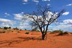Kalahari desert, Namibia Stock Photos