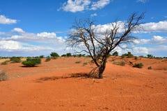 Kalahari desert, Namibia Royalty Free Stock Images