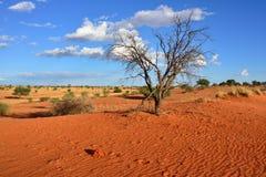 Kalahari desert, Namibia Stock Image