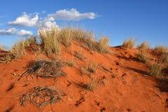 Kalahari desert, Namibia. Kalahari sand dune with traces of animals in desert at sunset time Stock Images