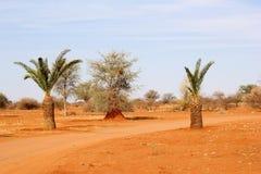Kalahari desert road landscape palm trees, Namibia. Red soil in the Kalahari desert and a sand track between the palm trees, Namibia, Africa Stock Photo