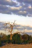 Kalahari at Dusk. Beautiful colors of red and orange near sunset in the Kalahari Desert Royalty Free Stock Images